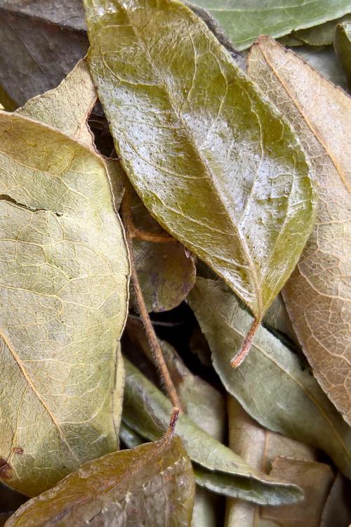 propiedades del curry planta